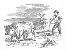 man with oxen
