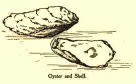 Oyster and Shell