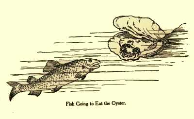 Fish Going to Eat the Oyster.